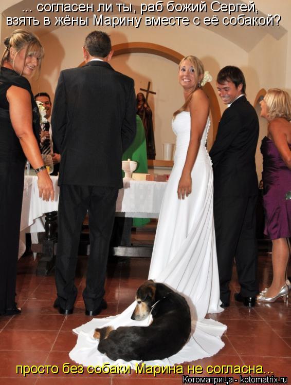 Котоматрица: ... согласен ли ты, раб божий Сергей, просто без собаки Марина не согласна... взять в жёны Марину вместе с её собакой?
