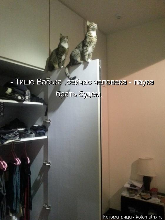 Котоматрица: - Тише Васька ,сейчас человека - паука  брать будем.