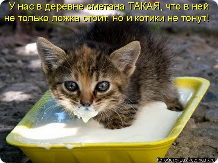 Котоматрица: У нас в деревне сметана ТАКАЯ, что в ней не только ложка стоит, но и котики не тонут!