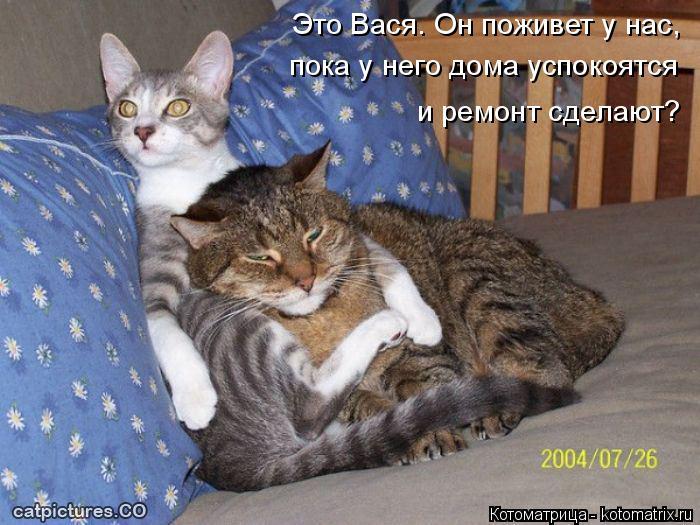 Котоматрица: Это Вася. Он поживет у нас,  пока у него дома успокоятся  и ремонт сделают?