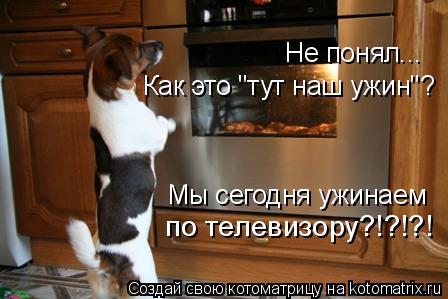 """Котоматрица: Как это """"тут наш ужин""""? Мы сегодня ужинаем по телевизору?!?!?! Не понял..."""