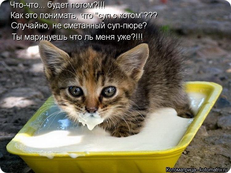 """Котоматрица: Что-что... будет потом?!!!  Как это понимать, что """"суп с котом""""??? Случайно, не сметанный суп-пюре? Ты маринуешь что ль меня уже?!!!"""