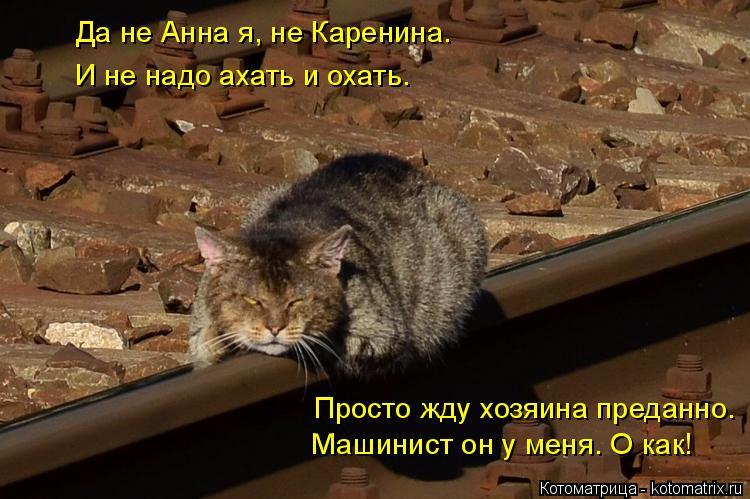 Котоматрица: Да не Анна я, не Каренина. И не надо ахать и охать. Машинист он у меня. О как! Просто жду хозяина преданно.