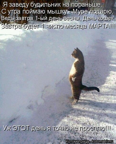 Котоматрица: Я заведу будильник на пораньше, С утра поймаю мышку - Муре подарю, Ведь завтра 1-ый день весны, День кошек, Завтра будет 1 число месяца МАРТА!!!