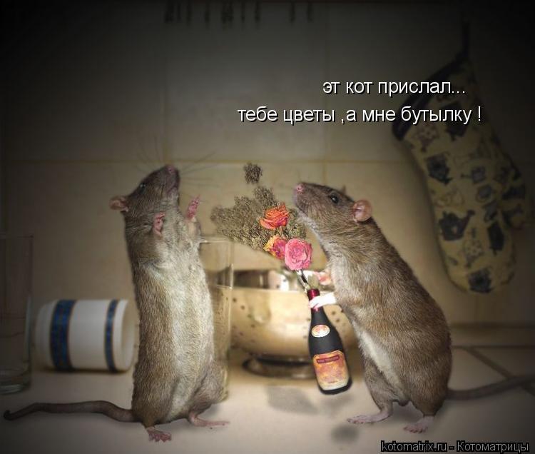 Котоматрица: эт кот прислал... тебе цветы ,а мне бутылку !