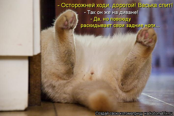 Котоматрица: - Да, но повсюду  - Так он же на диване! - Осторожней ходи, дорогой! Васька спит! раскидывает свои задние ноги...