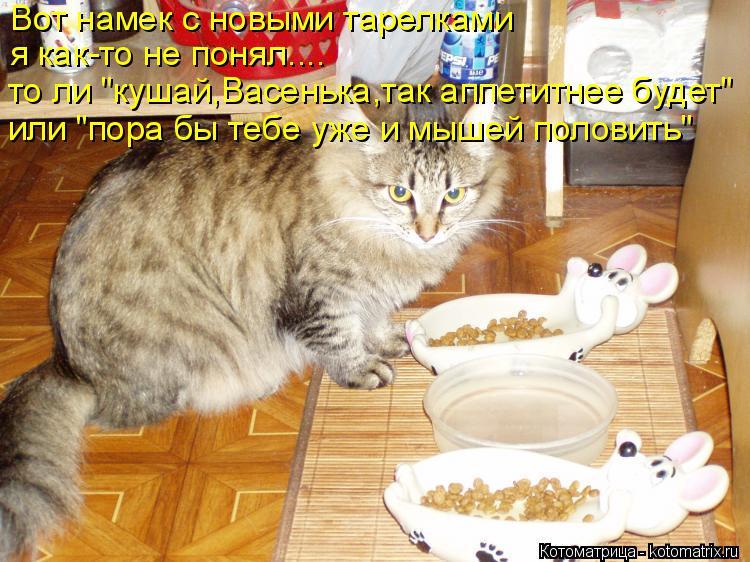 """Котоматрица: Вот намек с новыми тарелками я как-то не понял.... то ли """"кушай,Васенька,так аппетитнее будет"""" или """"пора бы тебе уже и мышей половить"""""""