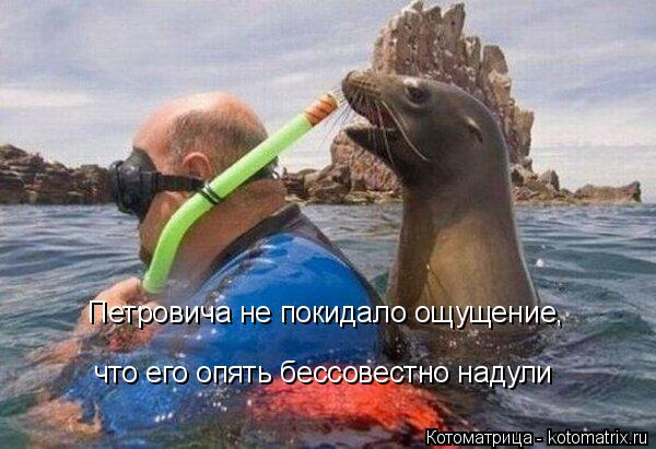 Котоматрица: Петровича не покидало ощущение,  что его опять бессовестно надули