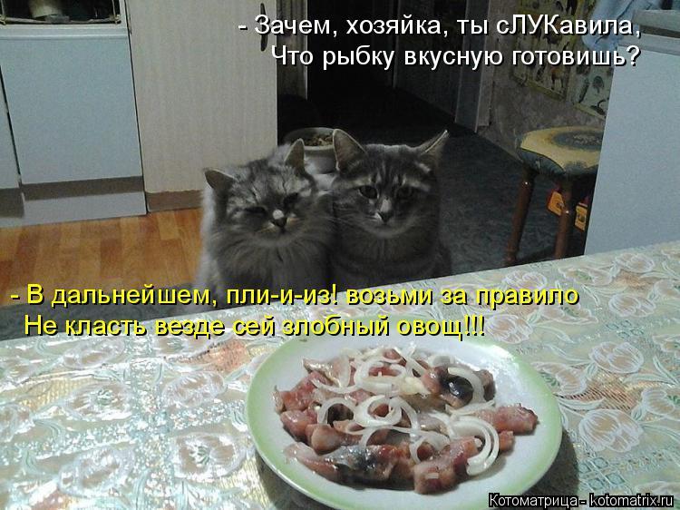 Котоматрица: - Зачем, хозяйка, ты сЛУКавила, Что рыбку вкусную готовишь? - В дальнейшем, пли-и-из! возьми за правило Не класть везде сей злобный овощ!!!