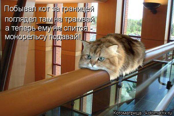 Котоматрица: Побывал кот за границей поглядел там на трамвай а теперь ему не спится -  монорельсу подавай!