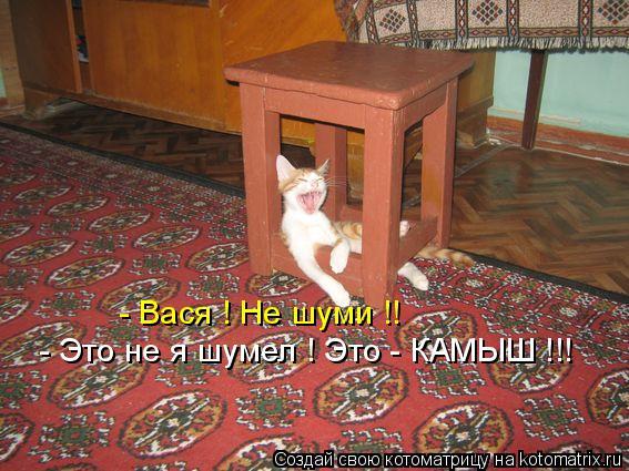 Котоматрица: - Вася ! Не шуми !! - Это не я шумел ! Это - КАМЫШ !!!