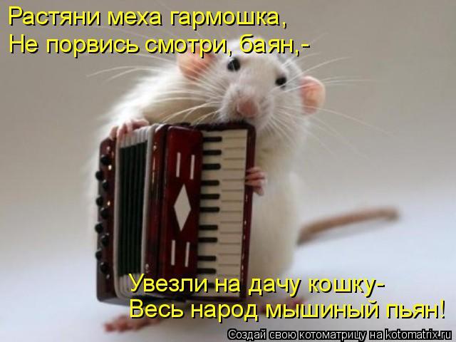 Котоматрица: Растяни меха гармошка, Не порвись смотри, баян,- Весь народ мышиный пьян! Увезли на дачу кошку-