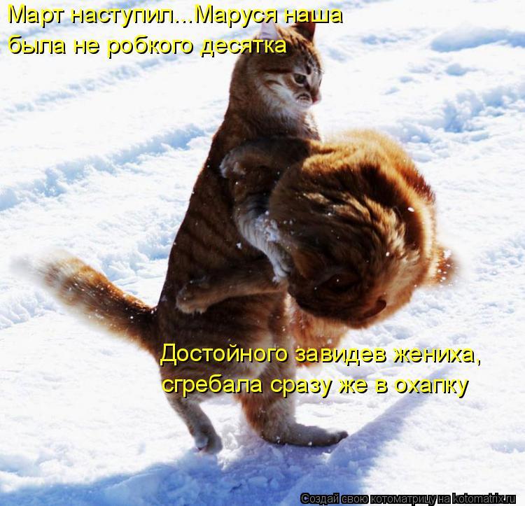 Котоматрица: Март наступил...Маруся наша была не робкого десятка Достойного завидев жениха, сгребала сразу же в охапку
