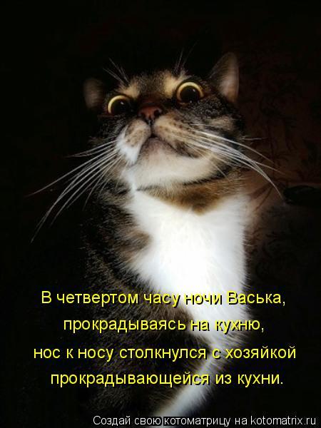 Котоматрица: В четвертом часу ночи Васька, прокрадываясь на кухню, нос к носу столкнулся с хозяйкой прокрадывающейся из кухни.