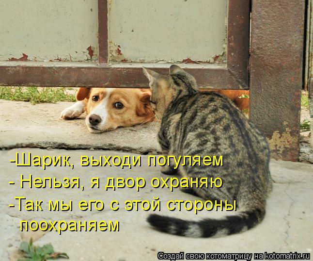 Котоматрица: -Шарик, выходи погуляем - Нельзя, я двор охраняю -Так мы его с этой стороны  поохраняем