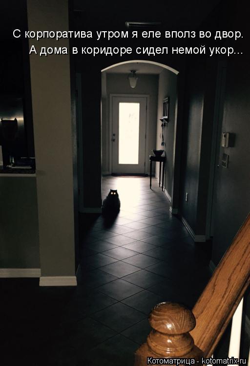 Котоматрица: С корпоратива утром я еле вполз во двор. А дома в коридоре сидел немой укор...
