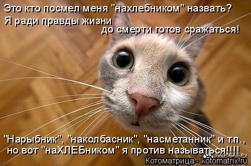 """Котоматрица: Это кто посмел меня """"нахлебником"""" назвать? """"Нарыбник"""", """"наколбасник"""", """"насметанник"""" и т.п., но вот """"наХЛЕБником"""" я против называться!!!! Я ради пра"""