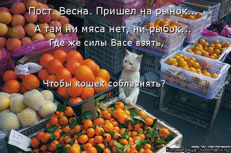 Котоматрица: Пост. Весна. Пришел на рынок... А там ни мяса нет, ни рыбок... Где же силы Васе взять, Чтобы кошек соблазнять?
