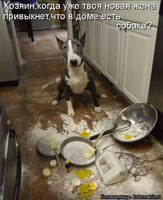 Котоматрица: Хозяин,когда уже твоя новая жена привыкнет,что в доме есть  собака?