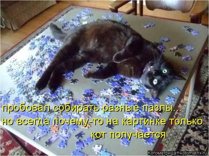 Котоматрица: пробовал собирать разные пазлы... но всегда почему-то на картинке только кот получается