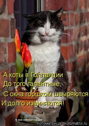 Котоматрица: А коты в Голландии До того галантные, С окна горшком швыряются И долго извиняются!