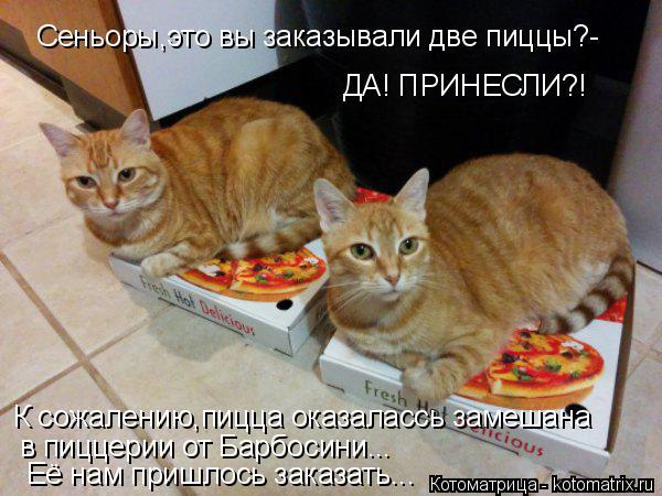 Котоматрица: Сеньоры,это вы заказывали две пиццы?-  ДА! ПРИНЕСЛИ?! К сожалению,пицца оказалассь замешана  в пиццерии от Барбосини... Её нам пришлось заказа