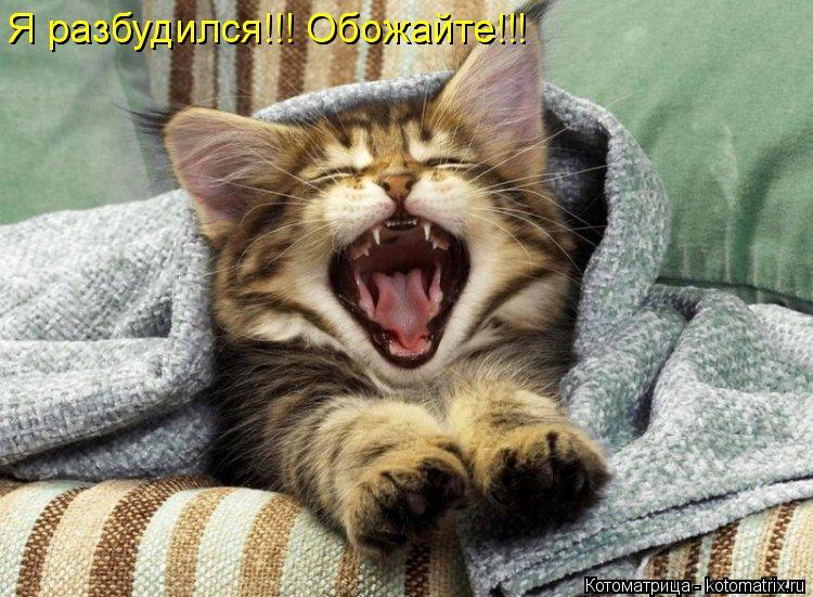 Котоматрица: Я разбудился!!! Обожайте!!! Я разбудился!!! Обожайте!!!