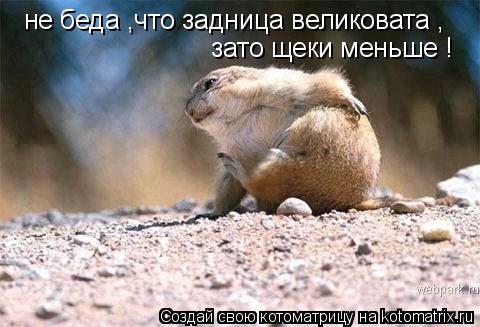 Котоматрица: не беда ,что задница великовата , зато щеки меньше !