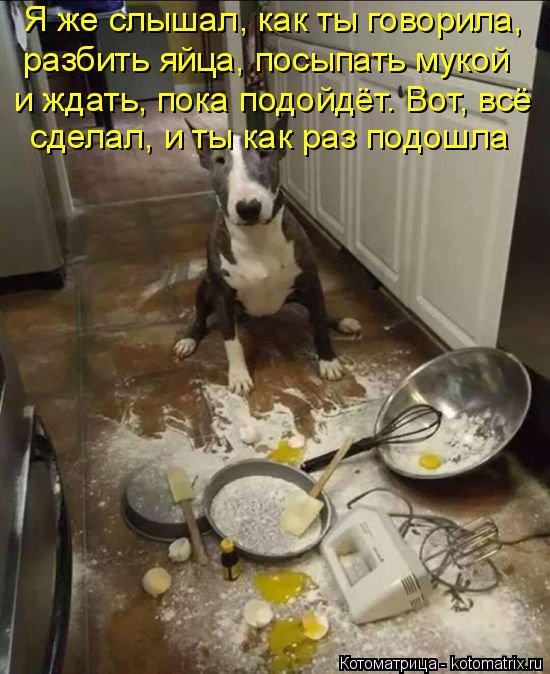 Котоматрица: Я же слышал, как ты говорила, разбить яйца, посыпать мукой и ждать, пока подойдёт. Вот, всё сделал, и ты как раз подошла