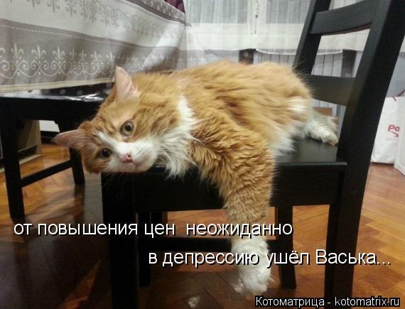 Котоматрица: от повышения цен  неожиданно  в депрессию ушёл Васька...