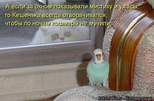 Котоматрица: А если за окном показывали мистику и ужасы. то Кешенька всегда отворачивался,  чтобы по ночам кошмары не мучили.
