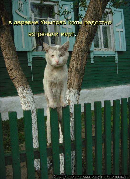 Котоматрица: в деревне Унылово коты радостно встречали март.