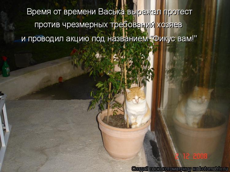 """Котоматрица: Время от времени Васька выражал протест против чрезмерных требований хозяев и проводил акцию под названием """"Фикус вам!"""""""