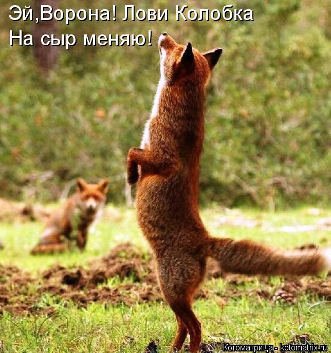 Котоматрица: Эй,Ворона! Лови Колобка На сыр меняю!