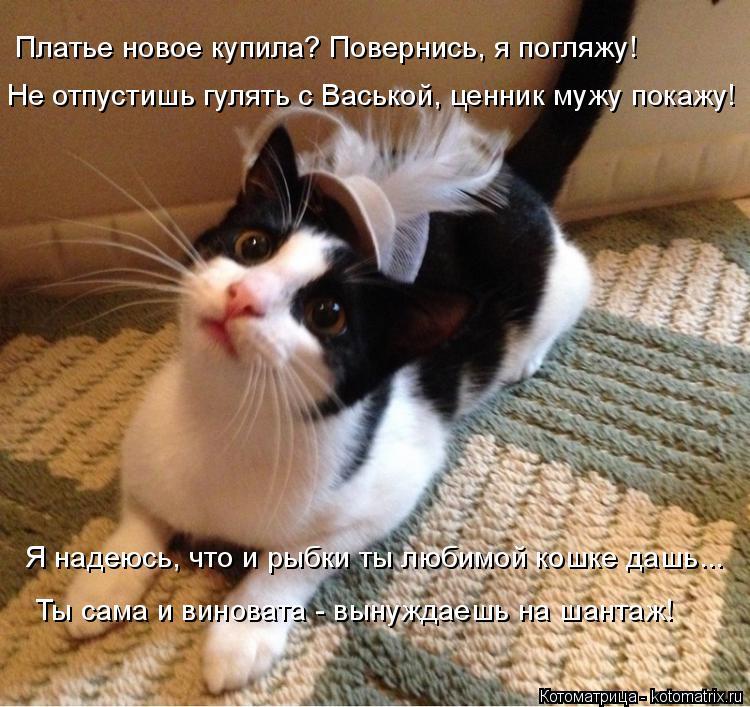 Котоматрица: Платье новое купила? Повернись, я погляжу! Не отпустишь гулять с Васькой, ценник мужу покажу! Я надеюсь, что и рыбки ты любимой кошке дашь... Т