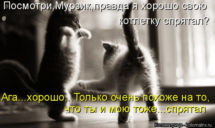 Котоматрица: Посмотри,Мурзик,правда я хорошо свою котлетку спрятал? Ага...хорошо...Только очень похоже на то, что ты и мою тоже...спрятал