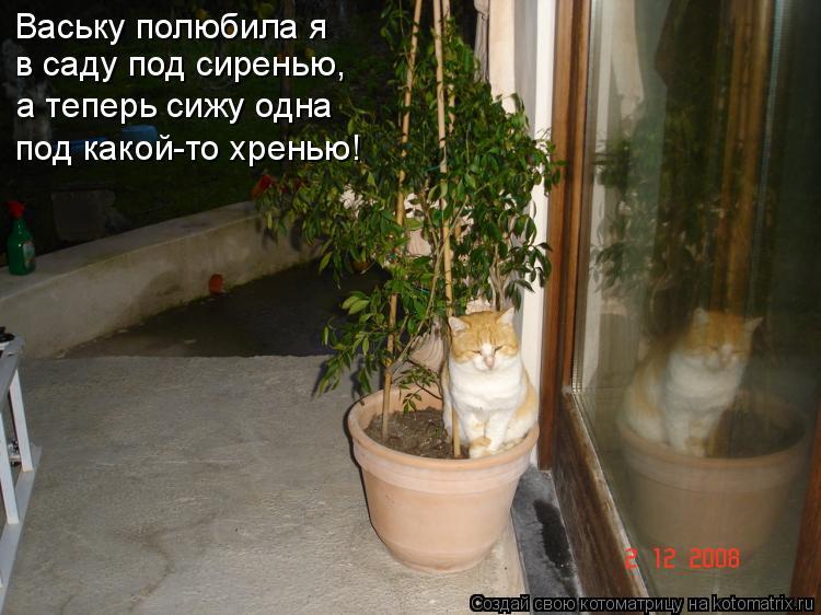 Котоматрица: Ваську полюбила я в саду под сиренью, а теперь сижу одна под какой-то хренью!