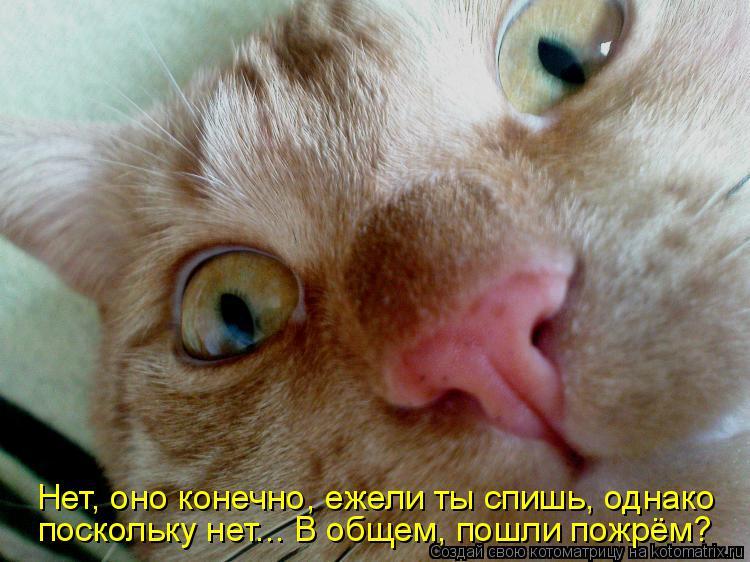 Котоматрица: Нет, оно конечно, ежели ты спишь, однако поскольку нет... В общем, пошли пожрём?