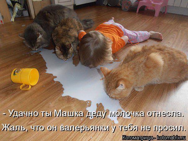 Котоматрица: - Удачно ты Машка деду молочка отнесла. Жаль, что он валерьянки у тебя не просил.