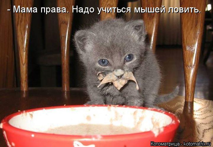 Котоматрица: - Мама права. Надо учиться мышей ловить.