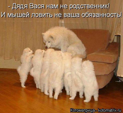 Котоматрица: - Дядя Вася нам не родственник! И мышей ловить не ваша обязанность!