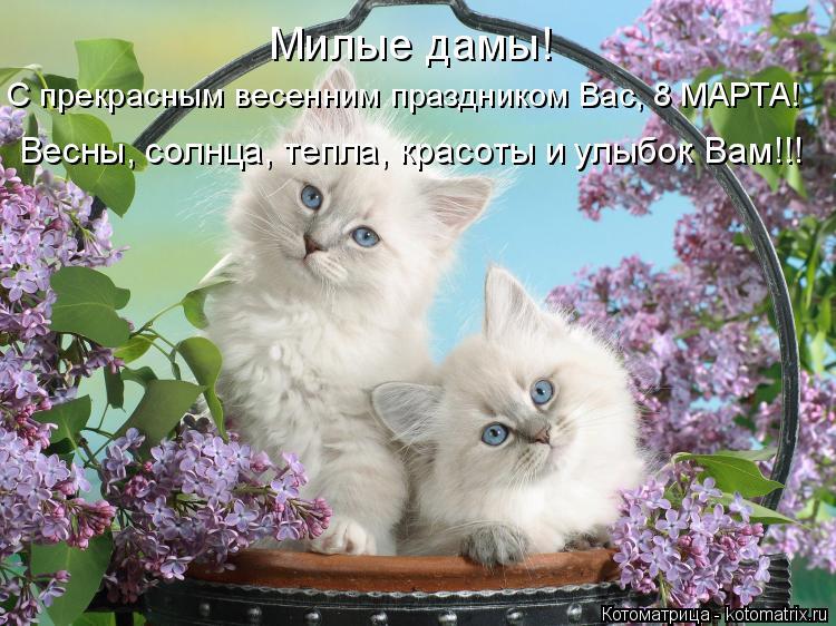 Котоматрица: Милые дамы! С прекрасным весенним праздником Вас, 8 МАРТА! Весны, солнца, тепла, красоты и улыбок Вам!!!