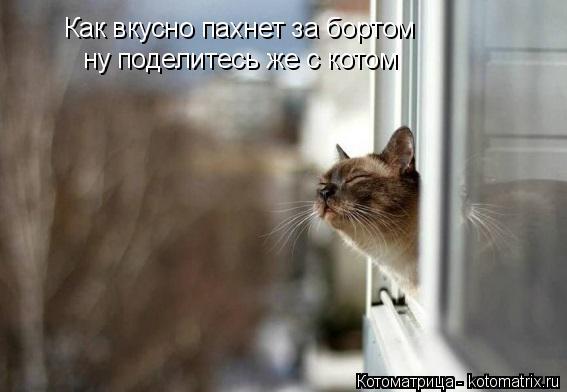 Котоматрица: Как вкусно пахнет за бортом ну поделитесь же с котом