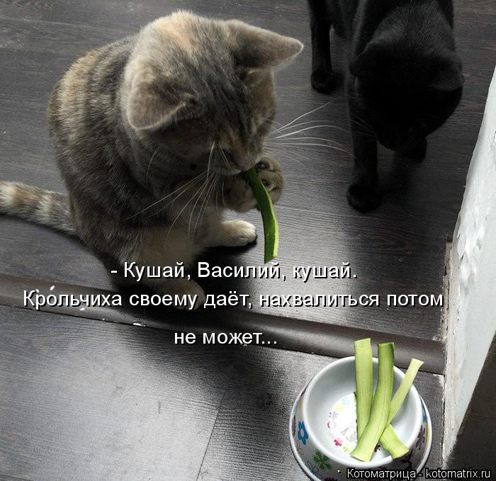 Котоматрица: - Кушай, Василий, кушай. Крольчиха своему даёт, нахвалиться потом не может...
