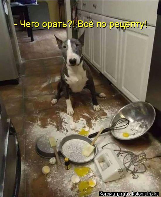 Котоматрица: - Чего орать?! Всё по рецепту!