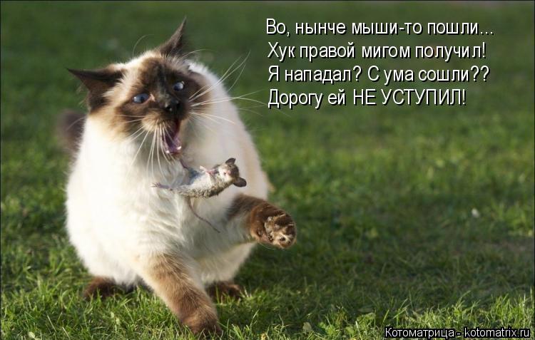 Котоматрица: Во, нынче мыши-то пошли... Хук правой мигом получил! Я нападал? С ума сошли?? Дорогу ей НЕ УСТУПИЛ!