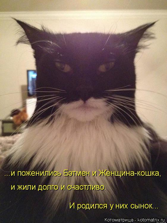 Котоматрица: ...и поженились Бэтмен и Женщина-кошка, и жили долго и счастливо. И родился у них сынок...