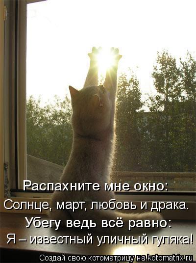Котоматрица: Я – известный уличный гуляка! Распахните мне окно: Солнце, март, любовь и драка. Убегу ведь всё равно:
