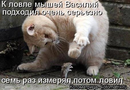Котоматрица: К ловле мышей Василий подходил очень серьезно семь раз измерял,потом ловил