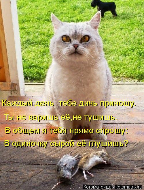 Котоматрица: Каждый день  тебе дичь приношу. Ты не варишь её,не тушишь. В общем я тебя прямо спрошу: В одиночку сырой её глушишь?